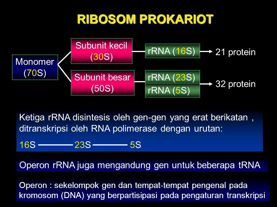 RIBOSOM PROKARIOT Subunit kecil (30S) rRNA (16S) 21 protein