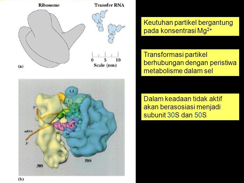 Keutuhan partikel bergantung pada konsentrasi Mg2+