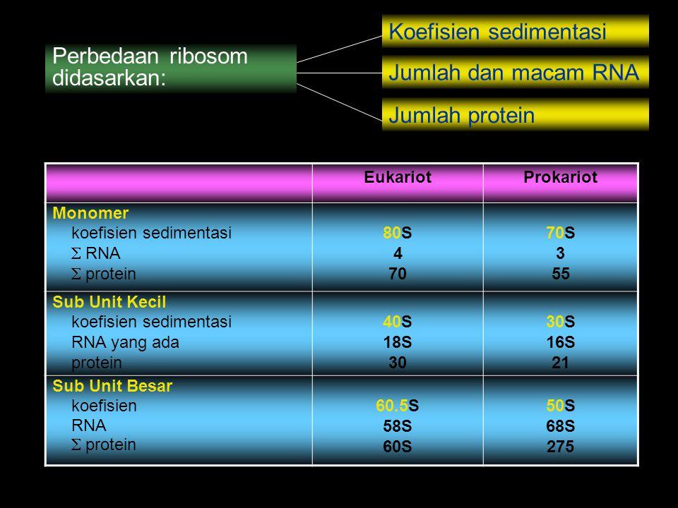 Koefisien sedimentasi Perbedaan ribosom didasarkan: