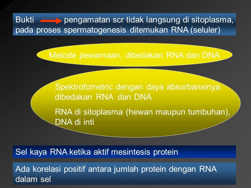 Bukti pengamatan scr tidak langsung di sitoplasma, pada proses spermatogenesis ditemukan RNA (seluler)