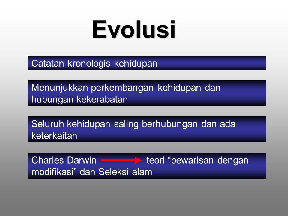 Evolusi Catatan kronologis kehidupan