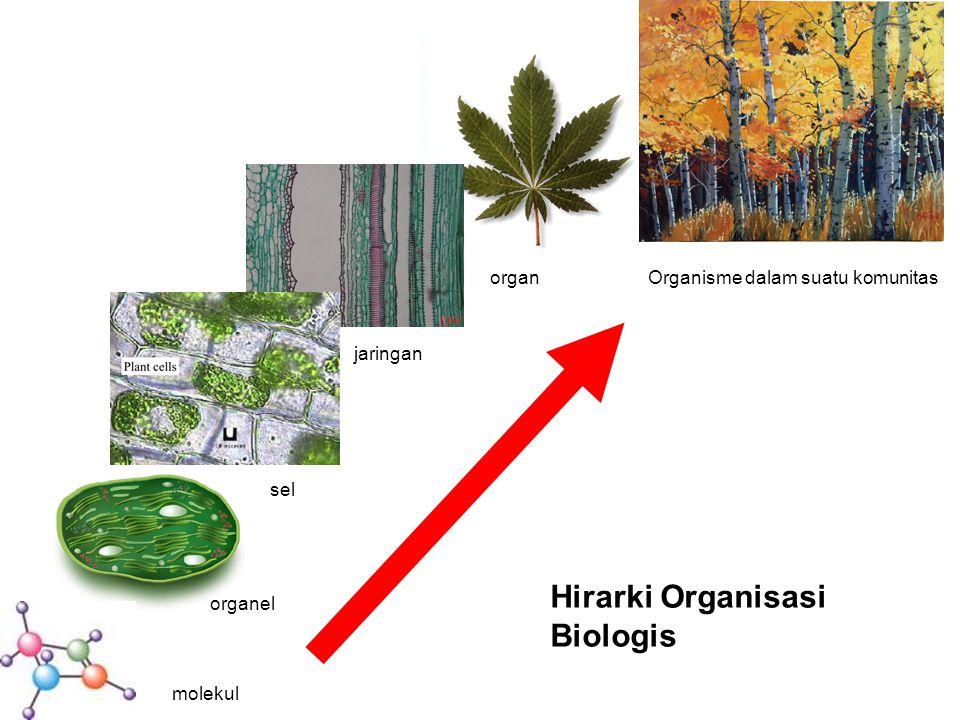 Hirarki Organisasi Biologis