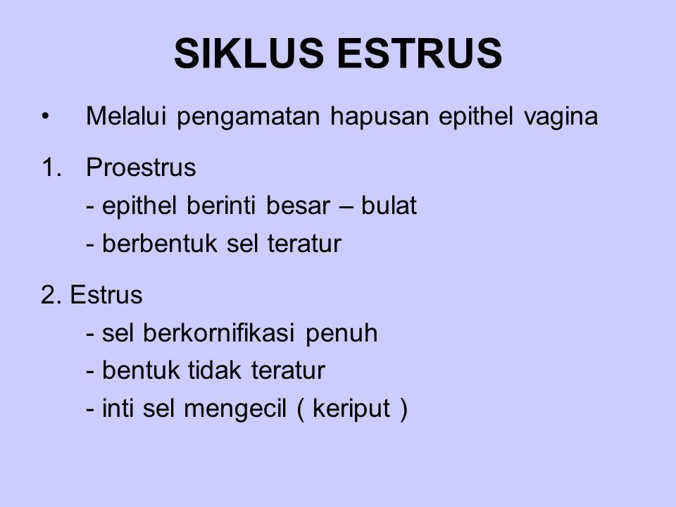 SIKLUS ESTRUS Melalui pengamatan hapusan epithel vagina Proestrus