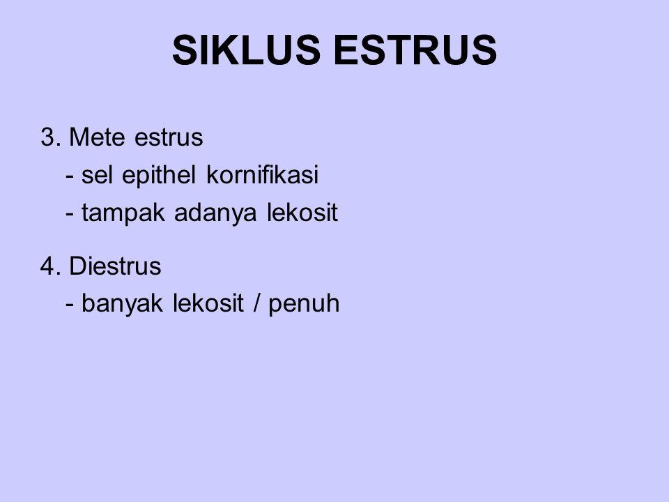 SIKLUS ESTRUS 3. Mete estrus - sel epithel kornifikasi
