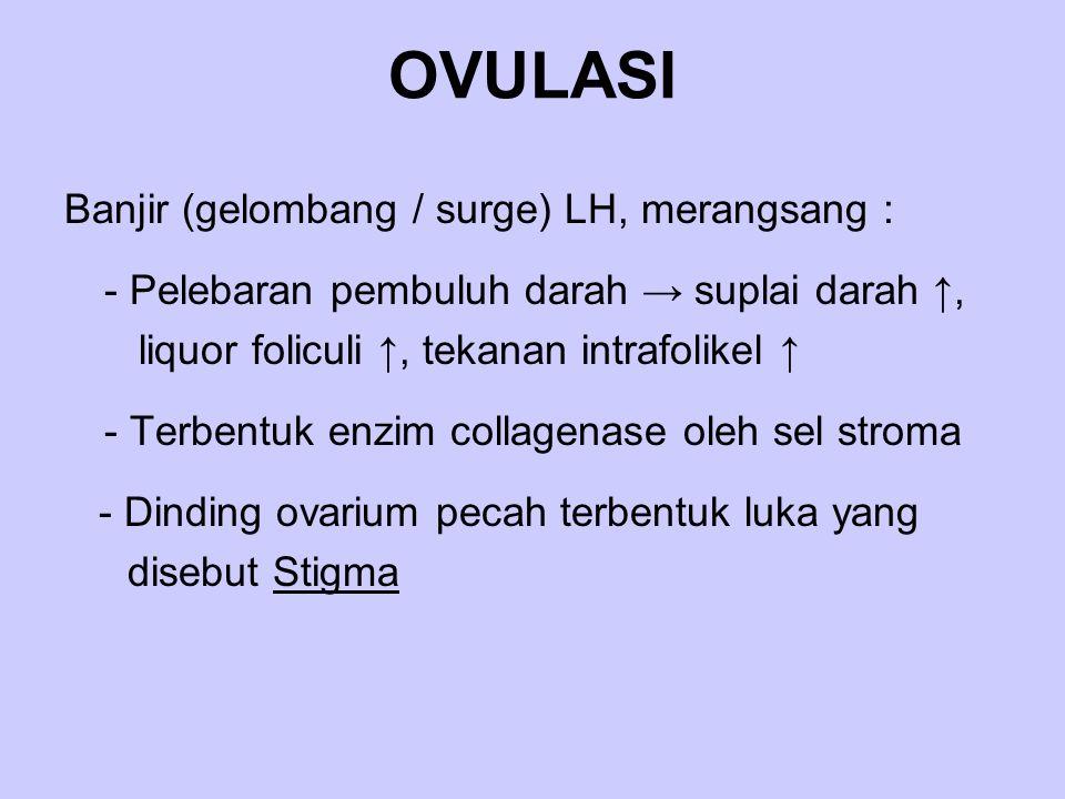 OVULASI Banjir (gelombang / surge) LH, merangsang :
