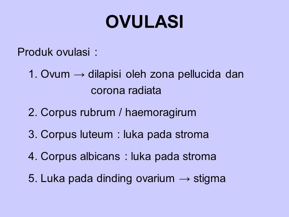 OVULASI Produk ovulasi : 1. Ovum → dilapisi oleh zona pellucida dan