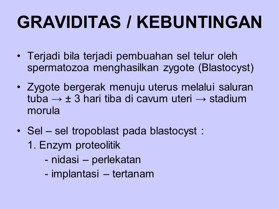 GRAVIDITAS / KEBUNTINGAN