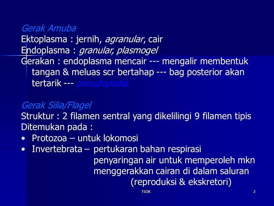 Ektoplasma : jernih, agranular, cair Endoplasma : granular, plasmogel