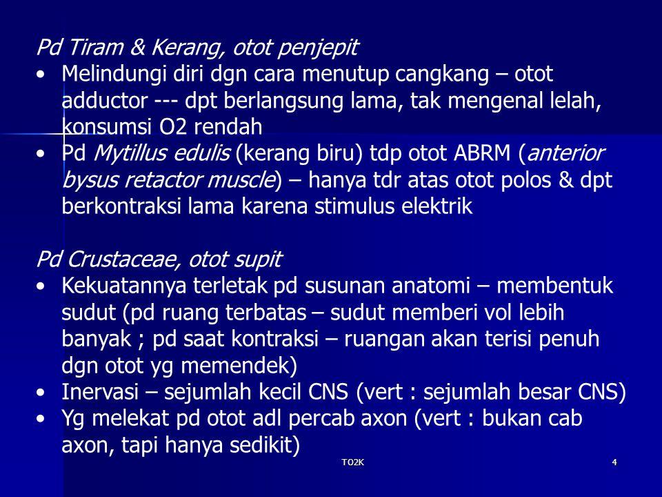Pd Tiram & Kerang, otot penjepit