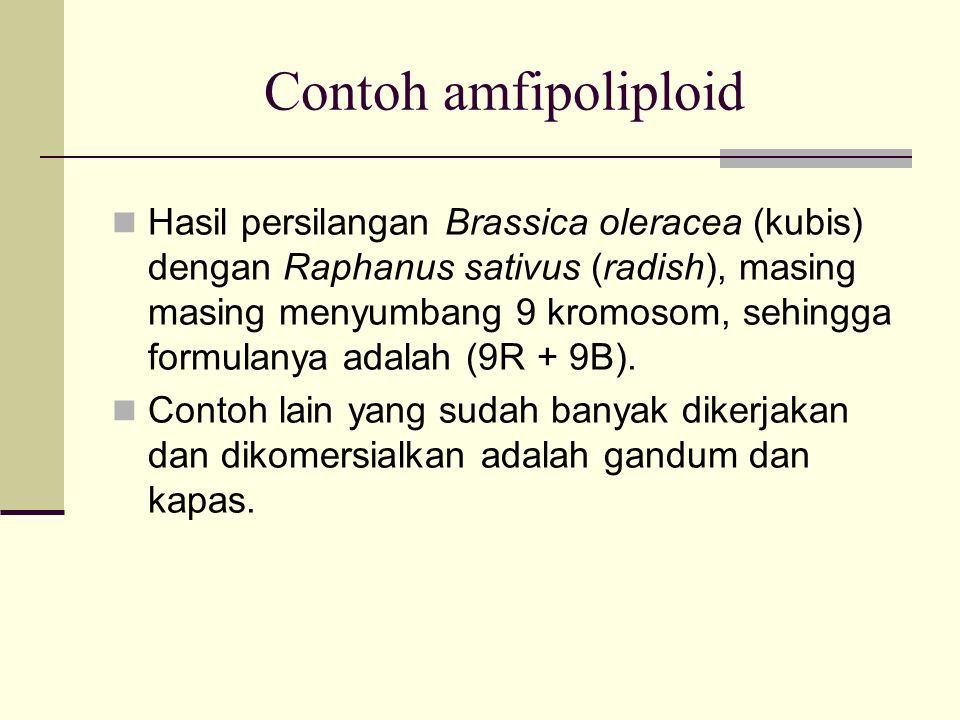 Contoh amfipoliploid