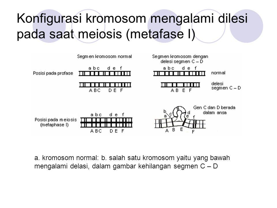 Konfigurasi kromosom mengalami dilesi pada saat meiosis (metafase I)
