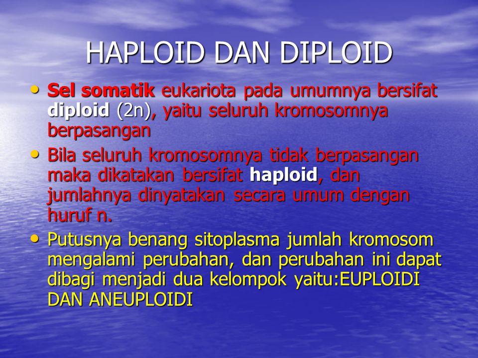 HAPLOID DAN DIPLOID Sel somatik eukariota pada umumnya bersifat diploid (2n), yaitu seluruh kromosomnya berpasangan.