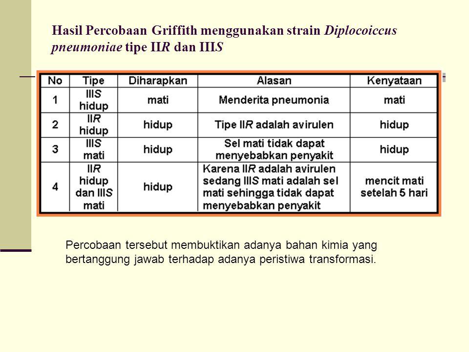 Hasil Percobaan Griffith menggunakan strain Diplocoiccus pneumoniae tipe IIR dan IIIS