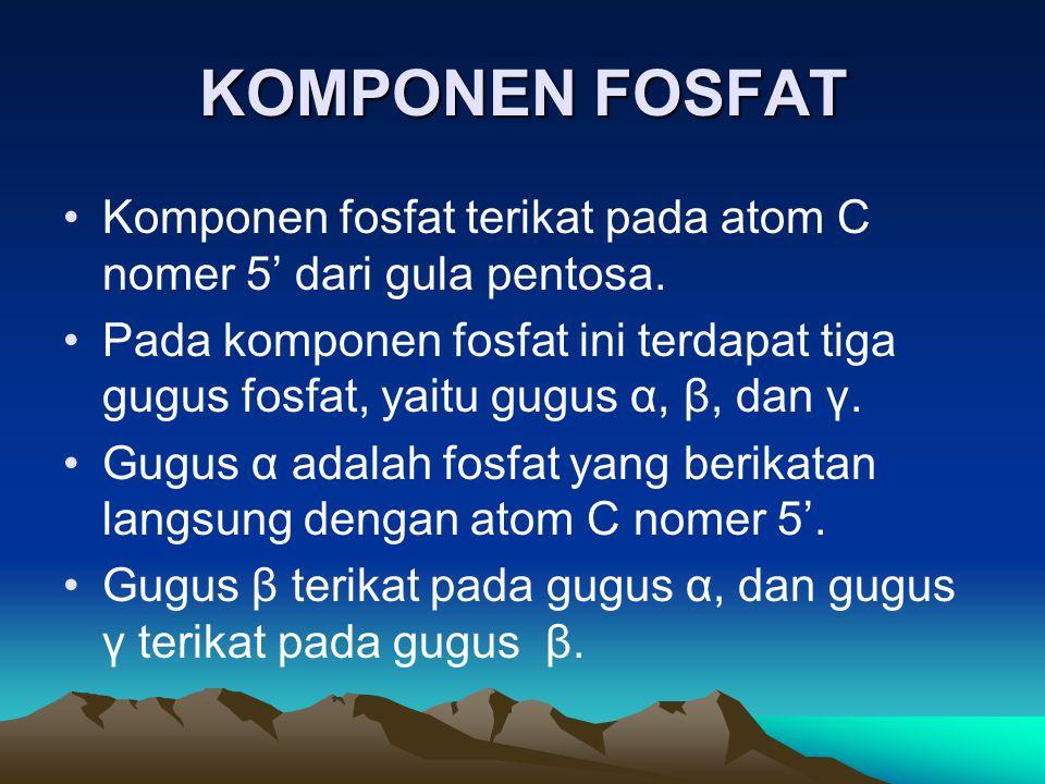 KOMPONEN FOSFAT Komponen fosfat terikat pada atom C nomer 5' dari gula pentosa.