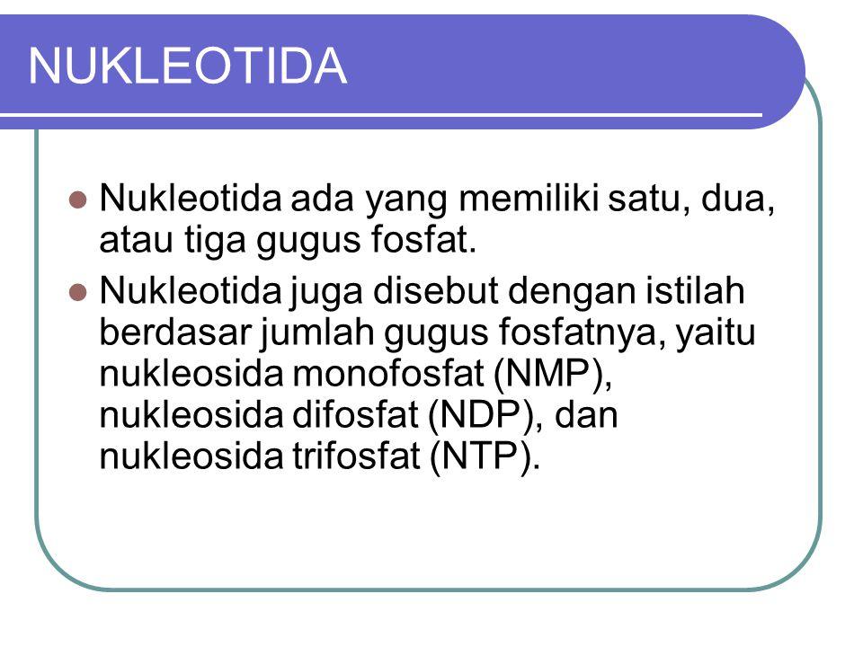 NUKLEOTIDA Nukleotida ada yang memiliki satu, dua, atau tiga gugus fosfat.