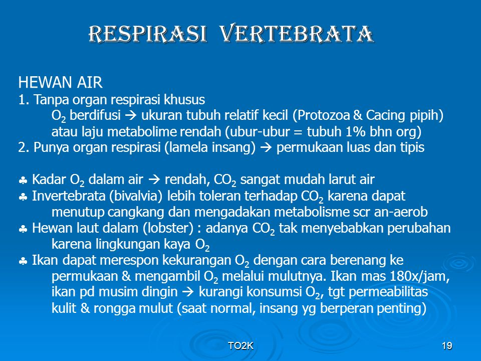 RESPIRASI VERTEBRATA HEWAN AIR 1. Tanpa organ respirasi khusus