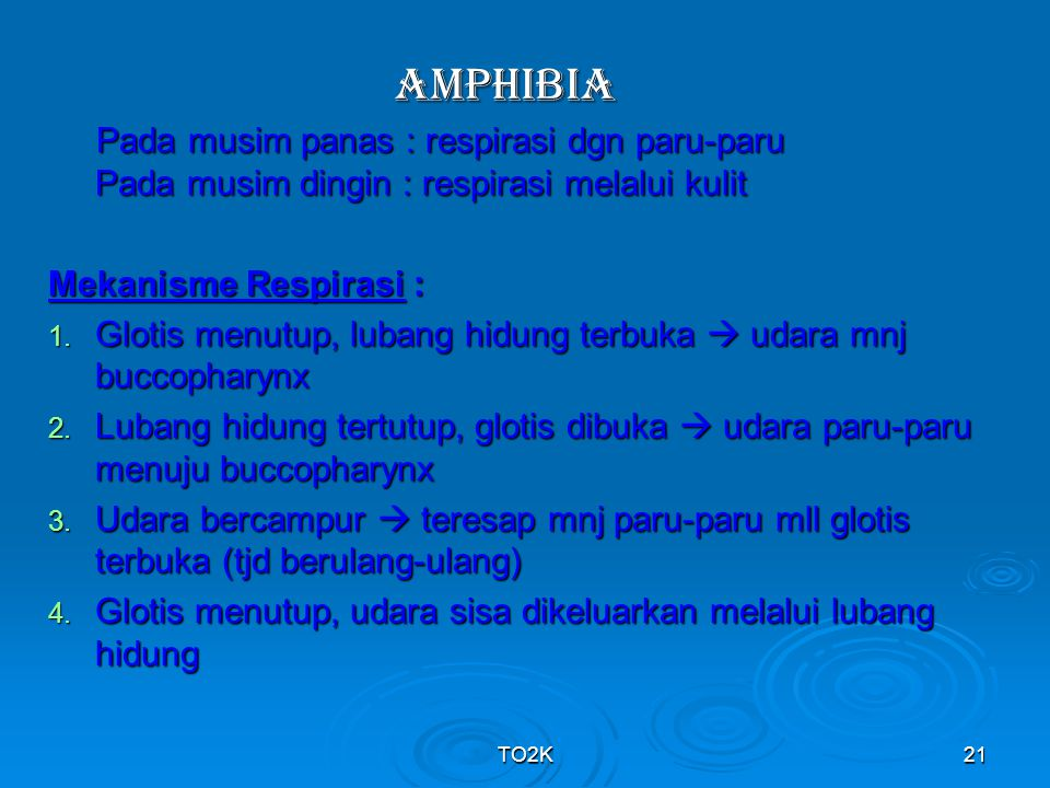 AMPHIBIA Pada musim panas : respirasi dgn paru-paru Pada musim dingin : respirasi melalui kulit.