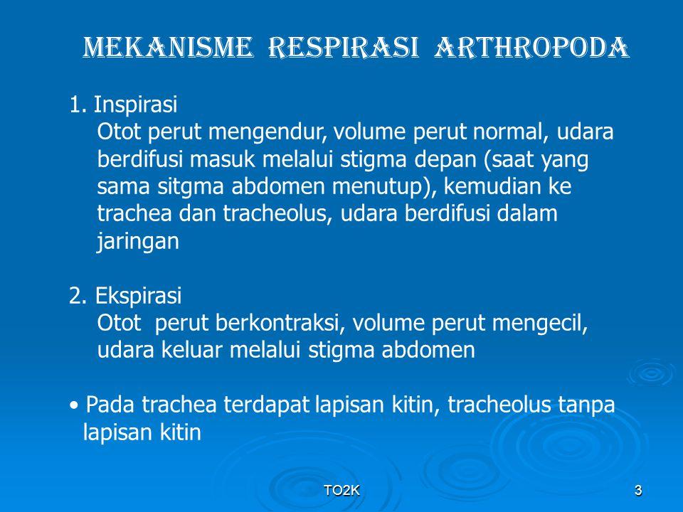 MEKANISME RESPIRASI ARTHROPODA