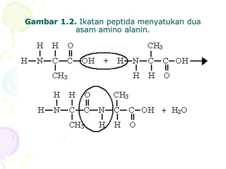 Gambar 1.2. Ikatan peptida menyatukan dua asam amino alanin.