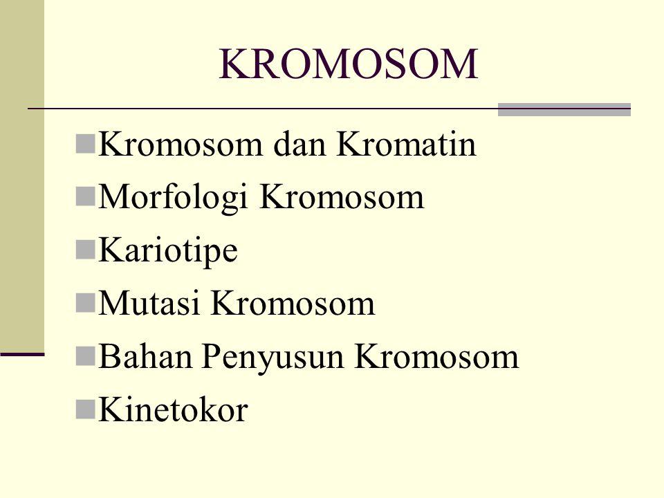 KROMOSOM Kromosom dan Kromatin Morfologi Kromosom Kariotipe