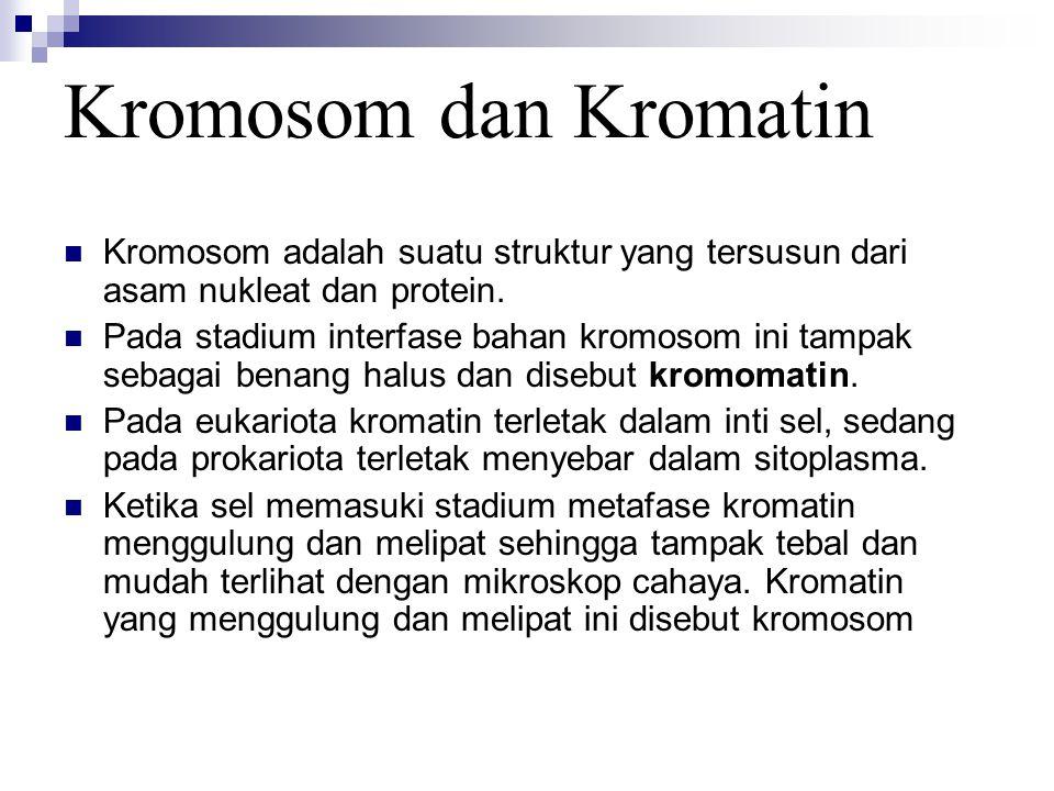 Kromosom dan Kromatin Kromosom adalah suatu struktur yang tersusun dari asam nukleat dan protein.