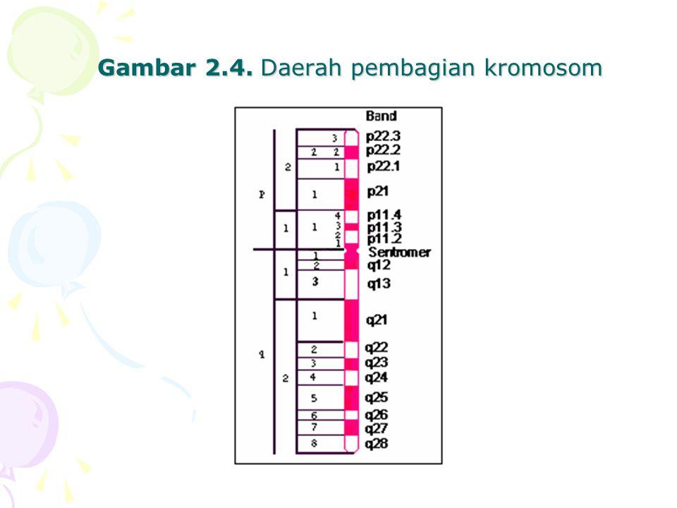 Gambar 2.4. Daerah pembagian kromosom