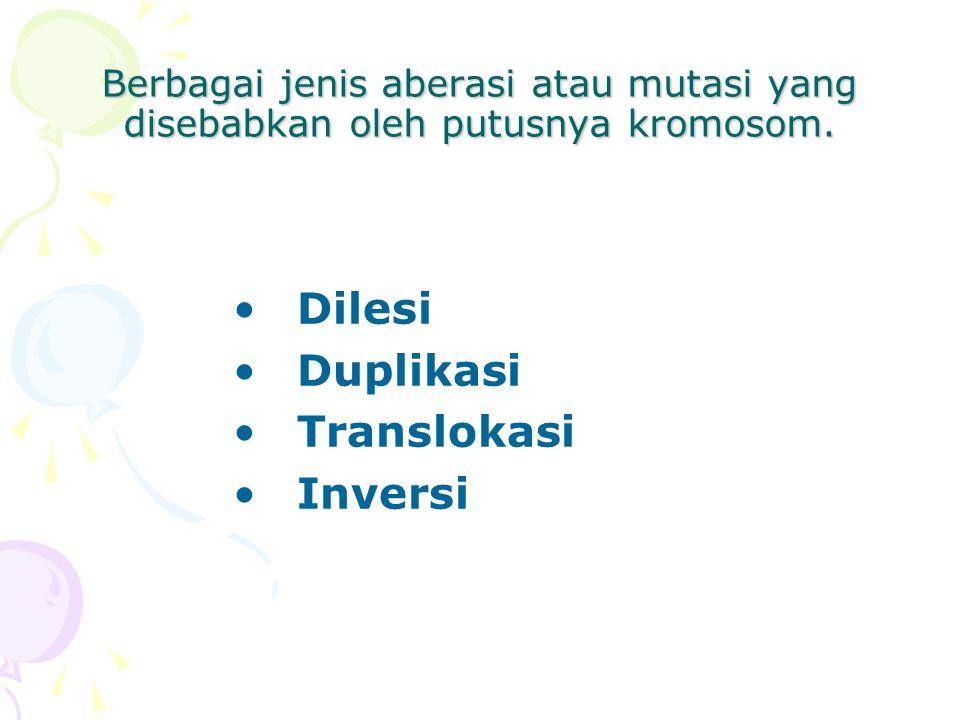 Dilesi Duplikasi Translokasi Inversi