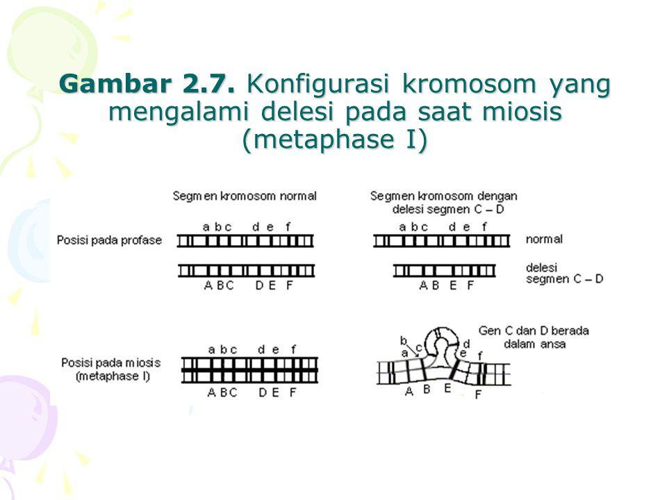 Gambar 2.7. Konfigurasi kromosom yang mengalami delesi pada saat miosis (metaphase I)