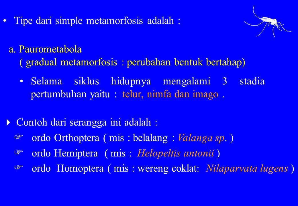 Tipe dari simple metamorfosis adalah :