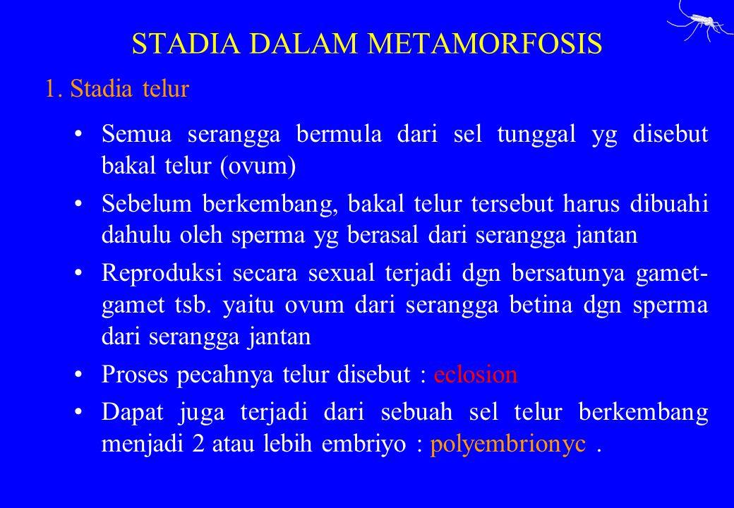 STADIA DALAM METAMORFOSIS