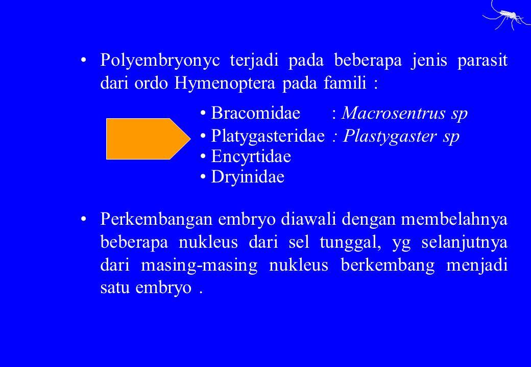 Polyembryonyc terjadi pada beberapa jenis parasit dari ordo Hymenoptera pada famili :