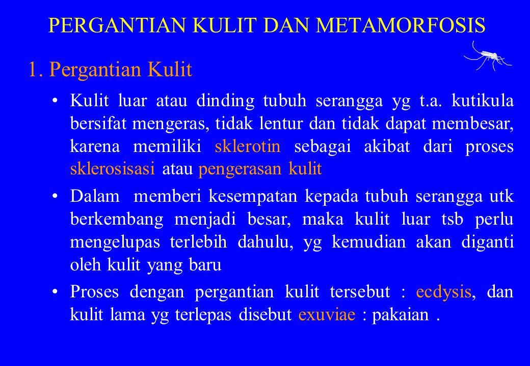 PERGANTIAN KULIT DAN METAMORFOSIS
