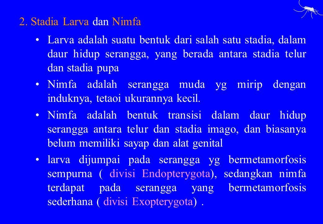 2. Stadia Larva dan Nimfa
