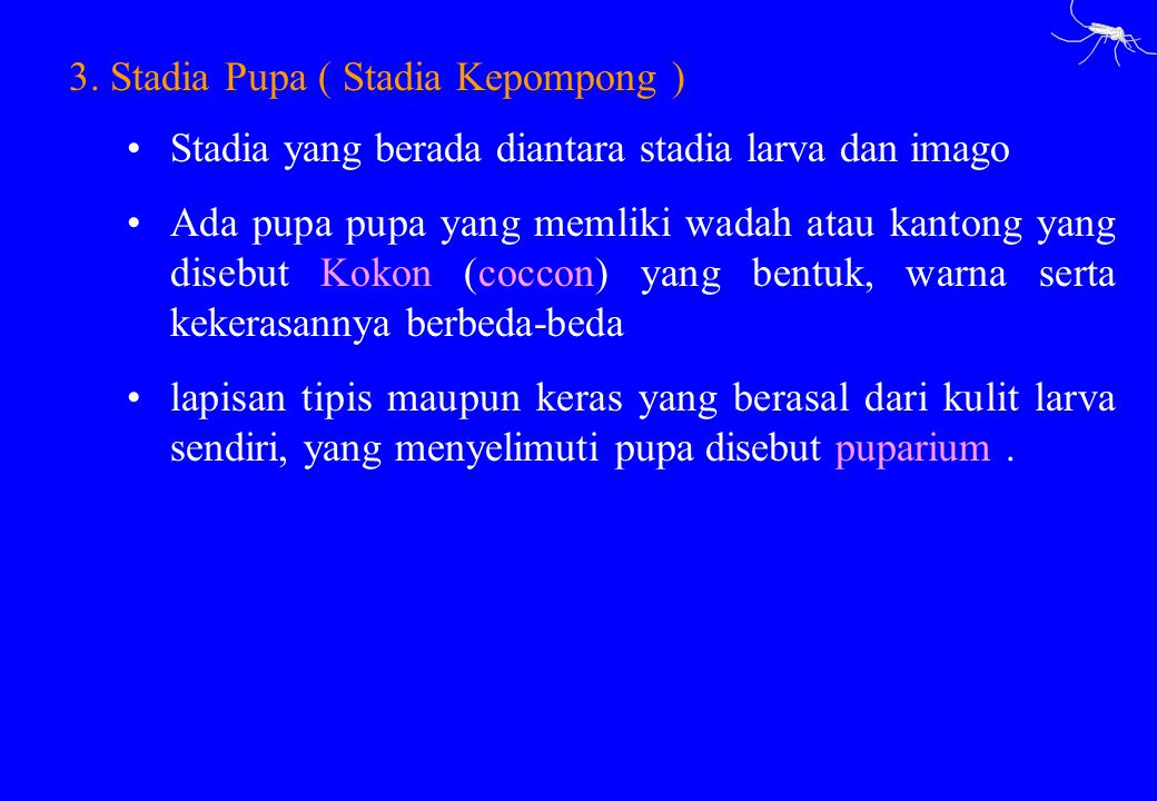 3. Stadia Pupa ( Stadia Kepompong )
