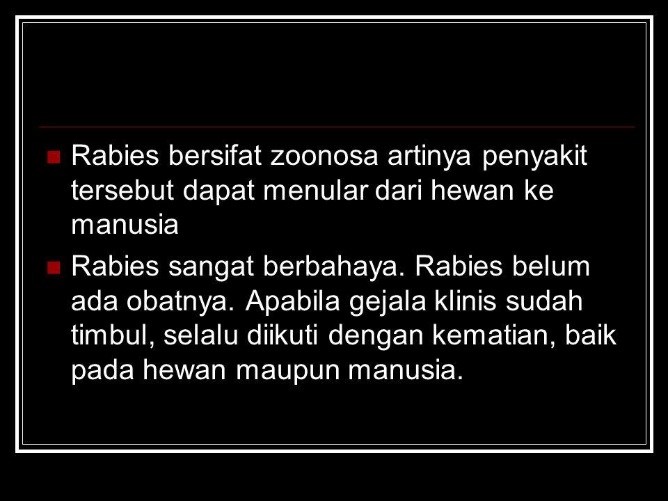 Rabies bersifat zoonosa artinya penyakit tersebut dapat menular dari hewan ke manusia
