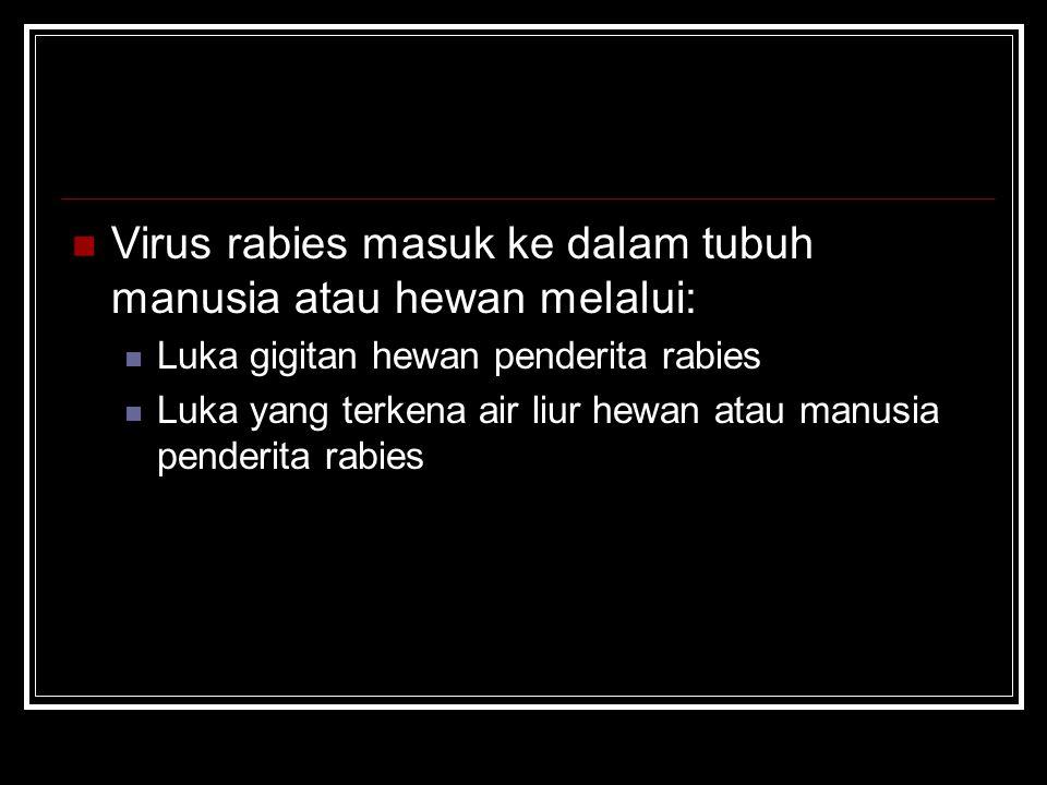 Virus rabies masuk ke dalam tubuh manusia atau hewan melalui: