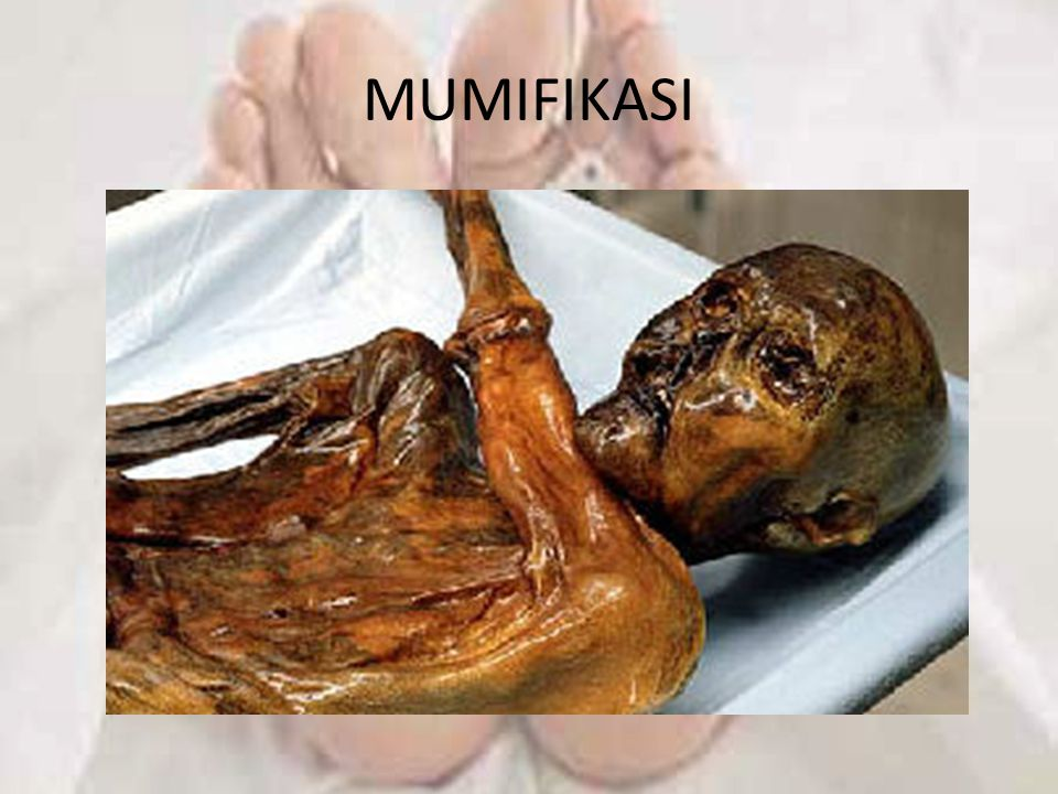 MUMIFIKASI