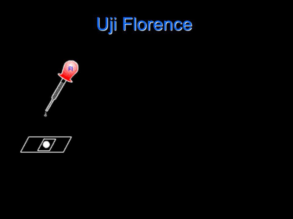 Uji Florence