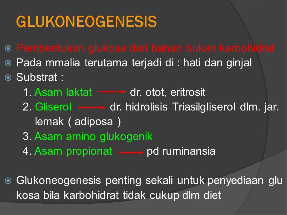 GLUKONEOGENESIS Pembentukan glukosa dari bahan bukan karbohidrat
