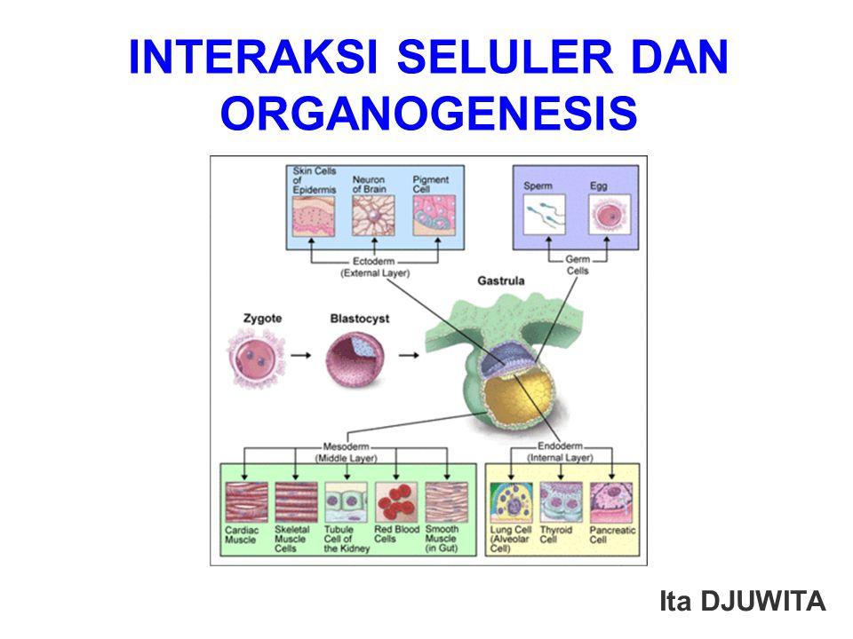 INTERAKSI SELULER DAN ORGANOGENESIS