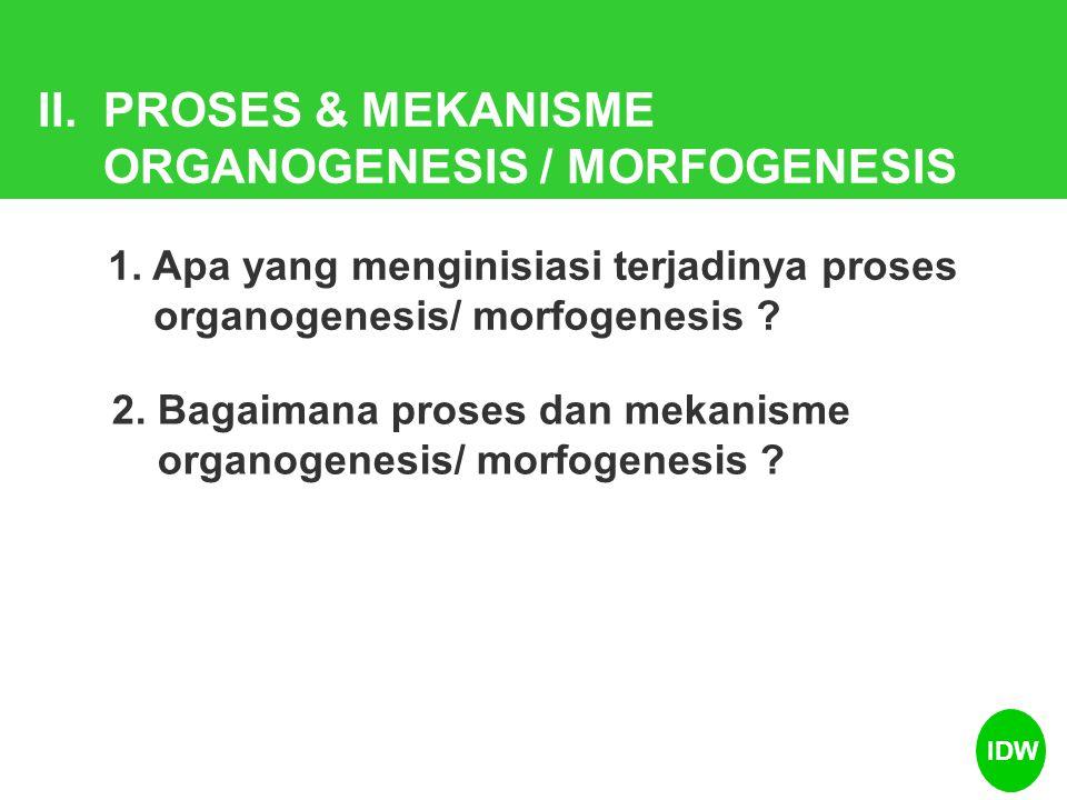 ORGANOGENESIS / MORFOGENESIS