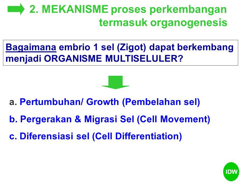 2. MEKANISME proses perkembangan termasuk organogenesis