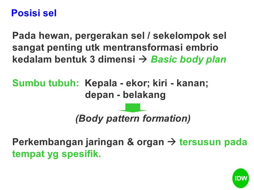 (Body pattern formation)