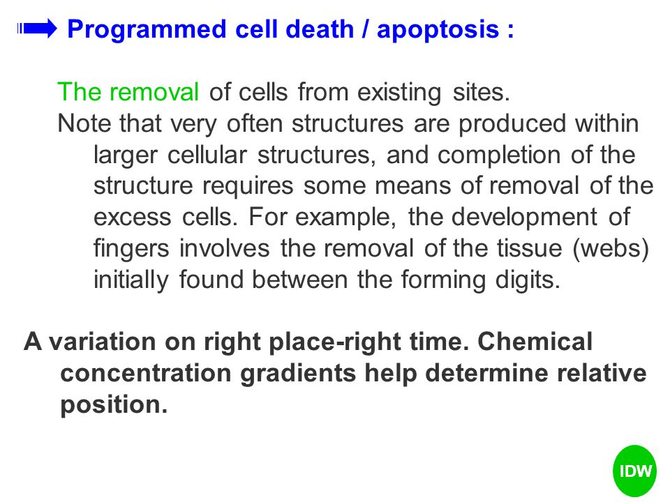 Programmed cell death / apoptosis :