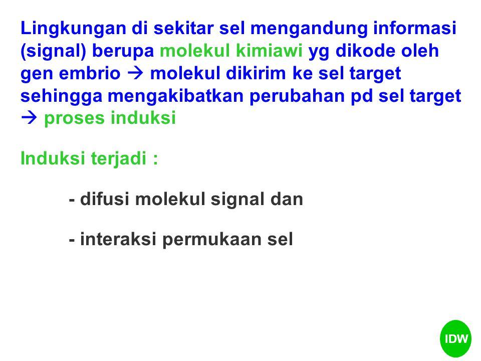 - difusi molekul signal dan - interaksi permukaan sel