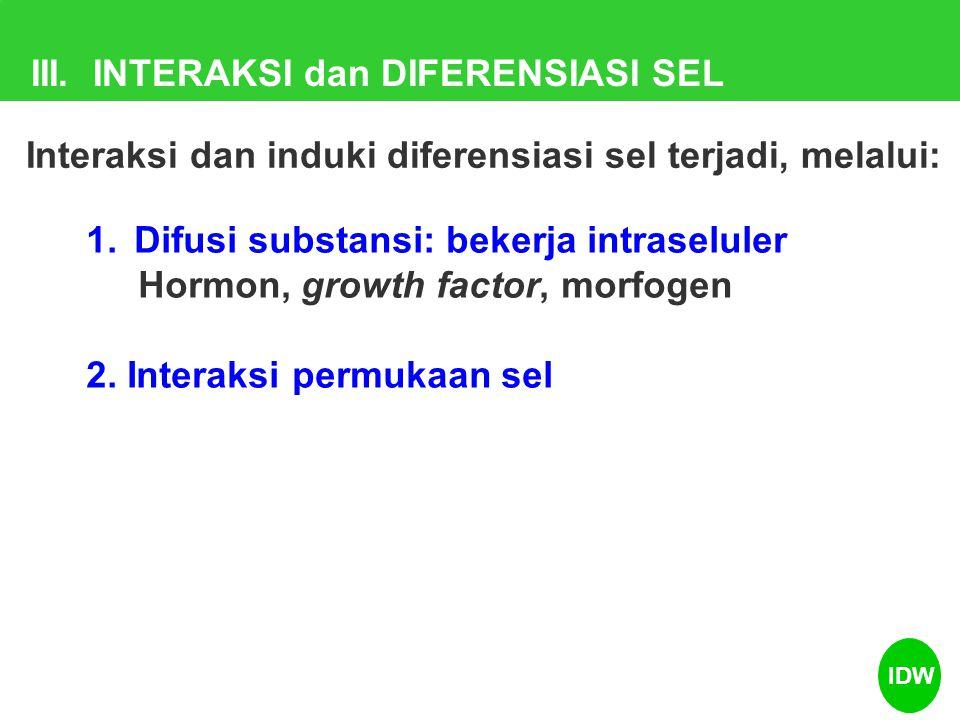 III. INTERAKSI dan DIFERENSIASI SEL