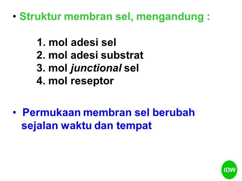 Struktur membran sel, mengandung : 1. mol adesi sel
