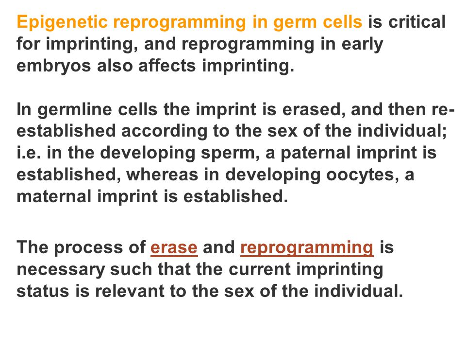 Epigenetic reprogramming in germ cells is critical for imprinting, and reprogramming in early embryos also affects imprinting.