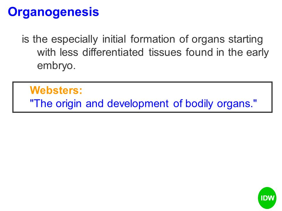 Organogenesis is the especially initial formation of organs starting with less differentiated tissues found in the early embryo.
