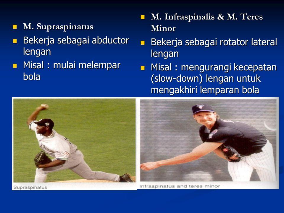 M. Infraspinalis & M. Teres Minor